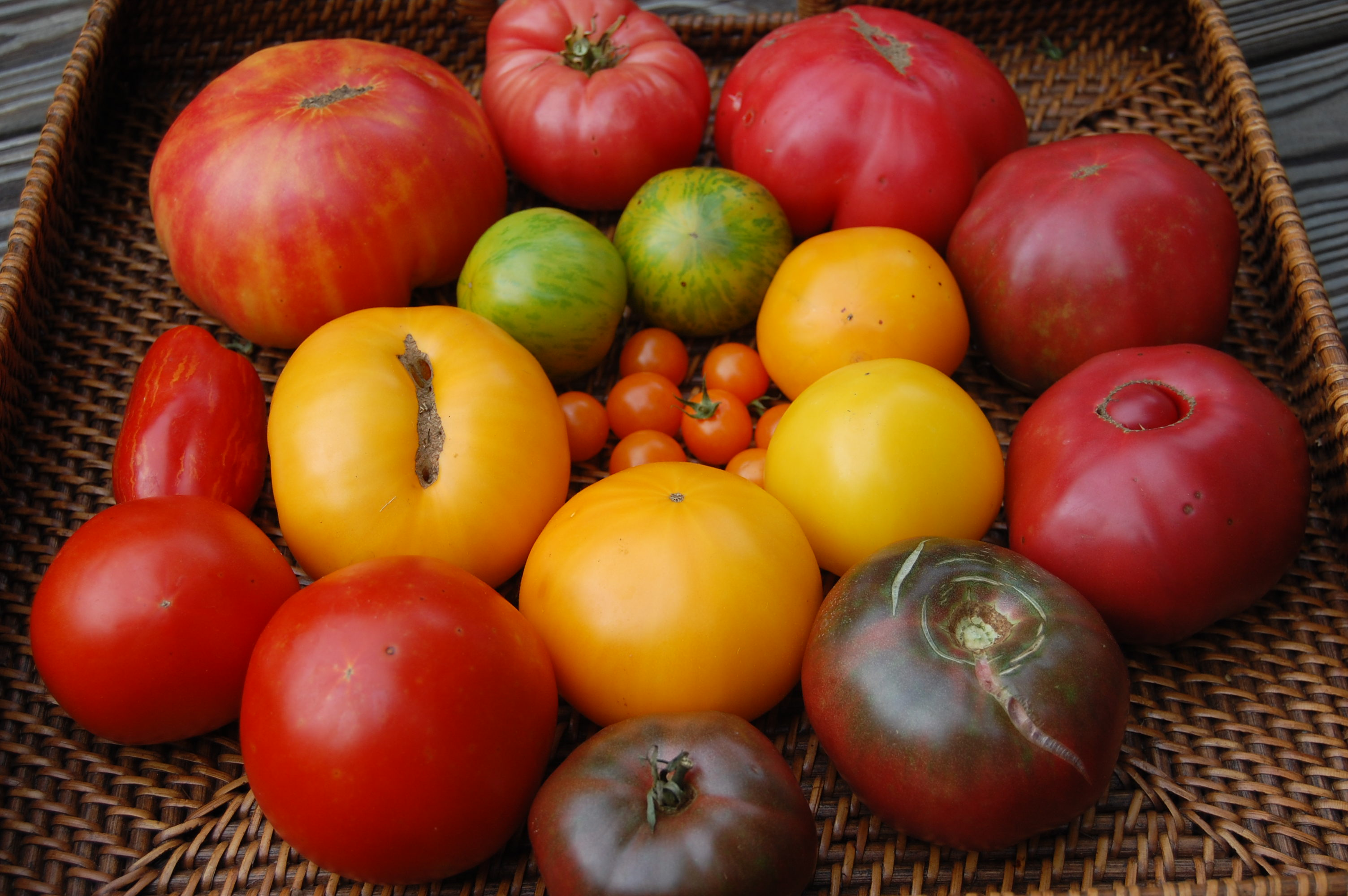 how to raise tomatoes indoors
