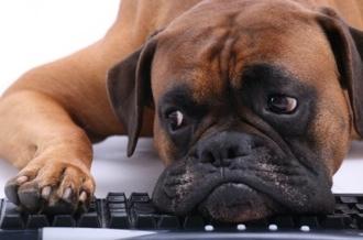 computer_sad_dog2.jpg